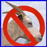 no-goat-t